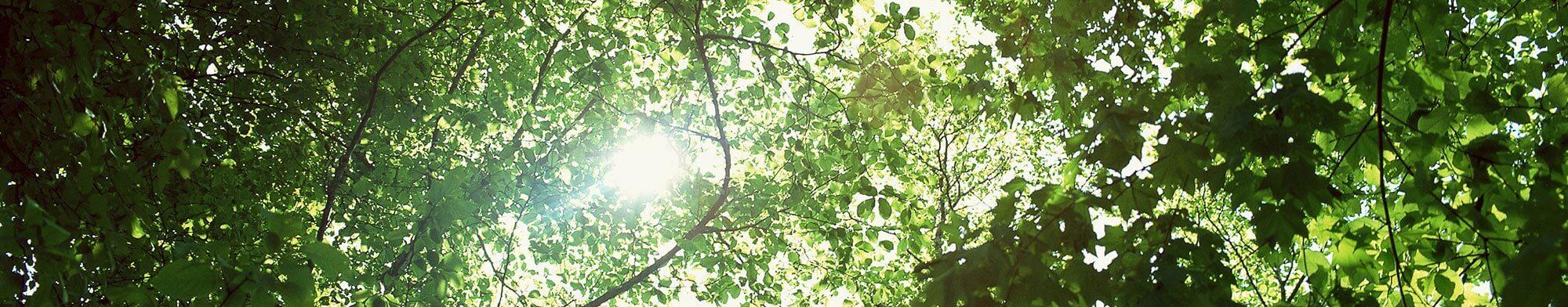 木々のイメージ